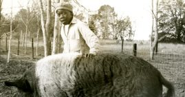 Black children fed to hogs and alligators as bait