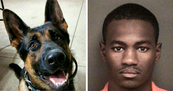 Kelontre Barefield, Black man sentenced to 43 years in prison for killing a dog